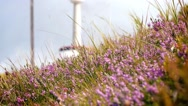 Slow motion footage of alpine wild flowers in the wind Stock Footage