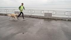Dog-Friendly Run Stock Footage