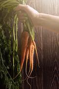 Freshly grown carrots Stock Photos
