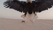 Low flight of eagle along sandy desert right up to camera Stock Footage