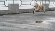 Active Dog Stock Footage