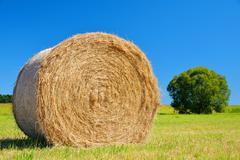 Straw bale on meadow Stock Photos