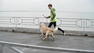 Young Runner Training Retriever Stock Footage