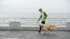 Walk Time Fun with Dog Stock Footage