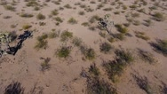 Aerial orbiting shot of Joshua trees in the desert Stock Footage