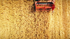 Aero: in the field harvester reaps millet - a ri l photo Stock Footage
