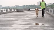 Training a Dog Stock Footage