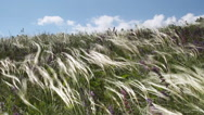 Feather Grass wind hills sky Stock Footage