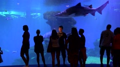People silhouettes looking at the fish , shark swimming in big aquarium Stock Footage
