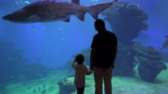 Enthusiastic father and  son holding hands, enjoy undersea life at aquarium  Stock Footage