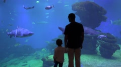 Father and happy son holding hands admire the fish, the shark from big aquarium Stock Footage