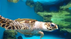 Turtle swimming on blue water Stock Footage