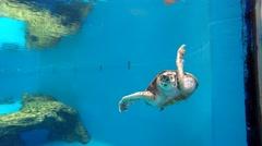 Big turtle look, animal swimming away Stock Footage