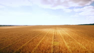 Aero : cloudy sky over golden field of corn - aerial photo Stock Footage