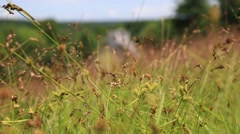 Summer field in New York Catskills.mp4 Stock Footage