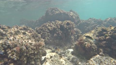 Beautiful fish and coral reef, gorgeous undersea wildlife Stock Footage