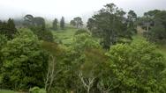 Hilly farmland, Katikati, New Zealand Stock Footage