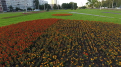 Flower bed on the earth with colorful flowers. Leninsky avenue, St. Petersburg Stock Footage