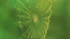 Spider in the Web Stock Footage