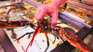 Man removed lobster from the aquarium of seafood restaurant Stock Footage