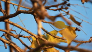 Animal Bird green parrot playing on Perch Stock Footage