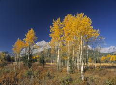 Fall Colours along Highway 40, Kananaskis Country, Alberta, Canada. Stock Photos
