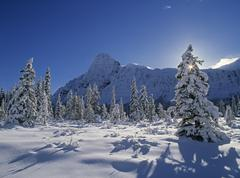 Mt. Chephren and the Mistaya River in Winter, Banff National Park, Alberta, Stock Photos