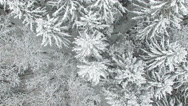 Flight and takeoff above winter forest on the north, aerial view with rotation. Stock Footage