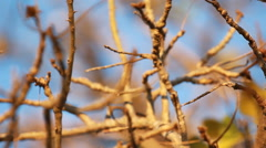 Tree and Perch Stock Footage