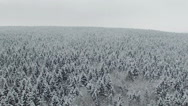 Flight above winter forest on the north, aerial view. Stock Footage