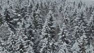 Low flight above winter forest on the north, aerial view. Stock Footage