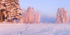 Fairy morning on the snowy valley Stock Photos