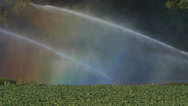 Sprinklers with rainbows in the spray. Agriculture in Ontario, Canada. Stock Footage