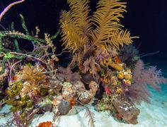Night underwater background with soft and hard corals, Cayo Largo Stock Photos