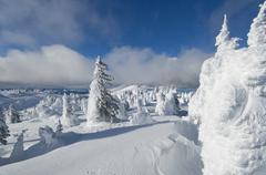 Snow ghosts create an alien like landscape at the top of Sun Peaks Ski Resort, Stock Photos