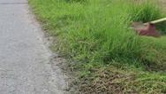 Trimming Grass. Grass cutting service. Stock Footage