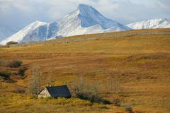 Old abandoned farmstead with mountains for Waterton National Park in the Stock Photos
