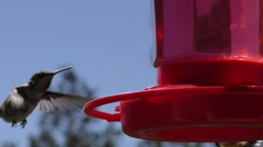 Close up of Humming birds around feeder with wind chime in foreground and pin Stock Footage