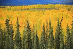 Fall colours along South Canol Road, Yukon. Stock Photos