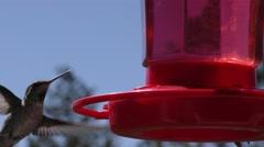 Close up of Humming birds around feeder shallow depth of field Stock Footage