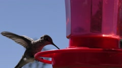 Single humming bird around feeder falpping wings shallow depth of field Stock Footage