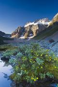 Wildflowers along lakeshore with Mount Fay in the background, Lower Consolation Stock Photos