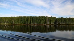 Birch growing on the shores of Lake Ladoga in the north of Russia Stock Footage