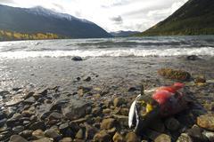 A post-spawning sockeye salmon on the shores of Chilko Lake, British Columbia, Stock Photos