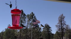 Closer shot of hummingbirds around feeder with Americam and Miltary flag blow Stock Footage