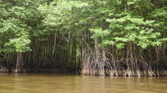 Mangrove forest prevents coastline corrosion in Thailand. Stock Footage