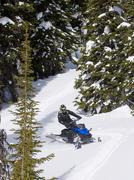 A single snowmobiler makes his way through the tree line, Monashee mountain Stock Photos