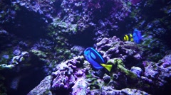 Beautiful underwater world Stock Footage
