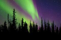 Aurora borealis (northern lights), boreal forest, Yellowknife environs, Kuvituskuvat