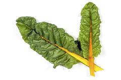 Two Green Leaves of Swiss Chard  With Yellow Stem Stock Photos